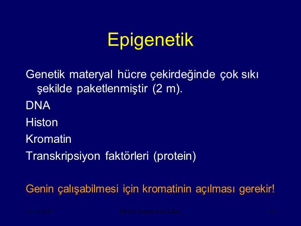 11.12.201512 Epigenetik Genetik materyal hücre çekirdeğinde çok sıkı şekilde paketlenmiştir (2 m). DNA Histon Kromatin Transkripsiyon faktörleri (prot