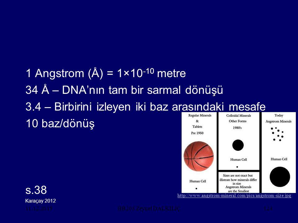 11.12.2015124 1 Angstrom (Å) = 1×10 -10 metre 34 Å – DNA'nın tam bir sarmal dönüşü 3.4 – Birbirini izleyen iki baz arasındaki mesafe 10 baz/dönüş s.38 BB203 Zeynel DALKILIÇ Karaçay 2012 http://www.angstrom-mineral.com/pics/angstrom-size.jpg