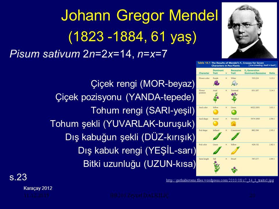 11.12.201520 Johann Gregor Mendel (1823 -1884, 61 yaş) Pisum sativum 2n=2x=14, n=x=7 Çiçek rengi (MOR-beyaz) Çiçek pozisyonu (YANDA-tepede) Tohum rengi (SARI-yeşil) Tohum şekli (YUVARLAK-buruşuk) Dış kabuğun şekli (DÜZ-kırışık) Dış kabuk rengi (YEŞİL-sarı) Bitki uzunluğu (UZUN-kısa) s.23 BB203 Zeynel DALKILIÇ Karaçay 2012 http://gathabiotens.files.wordpress.com/2010/08/c7_14_1_traits1.jpg