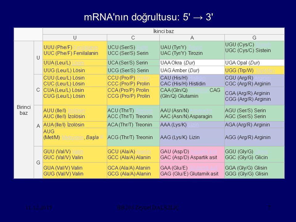 11.12.2015BB203 Zeynel DALKILIÇ7 İkinci baz UCAG Birinci baz U UUU (Phe/F) Fenilalanin UUC (Phe/F) FenilalaninFenilalanin UCU (Ser/S) Serin UCC (Ser/S) SerinSerin UAU (Tyr/Y) Tirozin UAC (Tyr/Y) TirozinTirozin UGU (Cys/C) Sistein UGC (Cys/C) SisteinSistein UUA (Leu/L) LösinLösinUCA (Ser/S) SerinUAA Okra (Dur)UGA Opal (Dur) UUG (Leu/L) LösinUCG (Ser/S) SerinUAG Amber (Dur)UGG (Trp/W) TriptofanTriptofan C CUU (Leu/L) Lösin CUC (Leu/L) Lösin CCU (Pro/P) Prolin CCC (Pro/P) ProlinProlin CAU (His/H) Histidin CAC (His/H) HistidinHistidin CGU (Arg/R) Arginin CGC (Arg/R) ArgininArginin CUA (Leu/L) Lösin CUG (Leu/L) Lösin CCA (Pro/P) Prolin CCG (Pro/P) Prolin CAA (Gln/Q) GlutaminCAG (Gln/Q) GlutaminGlutamin CGA (Arg/R) Arginin CGG (Arg/R) Arginin A AUU (Ile/I) İzolösin AUC (Ile/I) İzolösinİzolösin ACU (Thr/T) Treonin ACC (Thr/T) TreoninTreonin AAU (Asn/N) Asparagin AAC (Asn/N) AsparaginAsparagin AGU (Ser/S) Serin AGC (Ser/S) Serin AUA (Ile/I) İzolösinACA (Thr/T) TreoninAAA (Lys/K) LizinLizinAGA (Arg/R) Arginin AUG (Met/M) Metiyonin, Başla [2]Metiyonin [2] ACG (Thr/T) TreoninAAG (Lys/K) LizinAGG (Arg/R) Arginin G GUU (Val/V) Valin GUC (Val/V) ValinValin GCU (Ala/A) Alanin GCC (Ala/A) AlaninAlanin GAU (Asp/D) Aspartik asit GAC (Asp/D) Aspartik asitAspartik asit GGU (Gly/G) Glisin GGC (Gly/G) GlicinGlisin GUA (Val/V) Valin GUG (Val/V) Valin GCA (Ala/A) Alanin GCG (Ala/A) Alanin GAA (Glu/E) Glutamik asit GAG (Glu/E) Glutamik asitGlutamik asit GGA (Gly/G) Glisin GGG (Gly/G) Glisin mRNA nın doğrultusu: 5 → 3