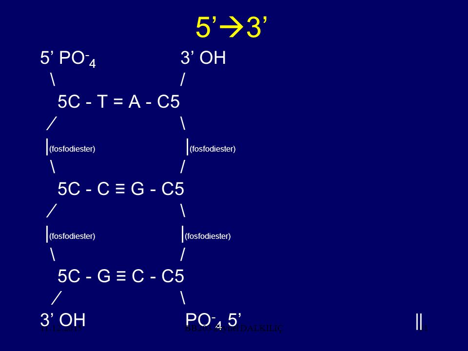 11.12.201581 5'  3' 5' PO - 4 3' OH \/ 5C - T = A - C5 ∕\ | (fosfodiester) | (fosfodiester) \/ 5C - C ≡ G - C5 ∕\ | (fosfodiester) | (fosfodiester) \/ 5C - G ≡ C - C5 ∕\ 3' OH PO - 4 5' ‖ BB203 Zeynel DALKILIÇ