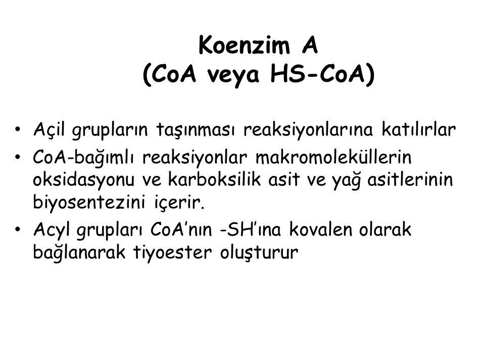 Koenzim A (CoA veya HS-CoA) Açil grupların taşınması reaksiyonlarına katılırlar CoA-bağımlı reaksiyonlar makromoleküllerin oksidasyonu ve karboksilik asit ve yağ asitlerinin biyosentezini içerir.