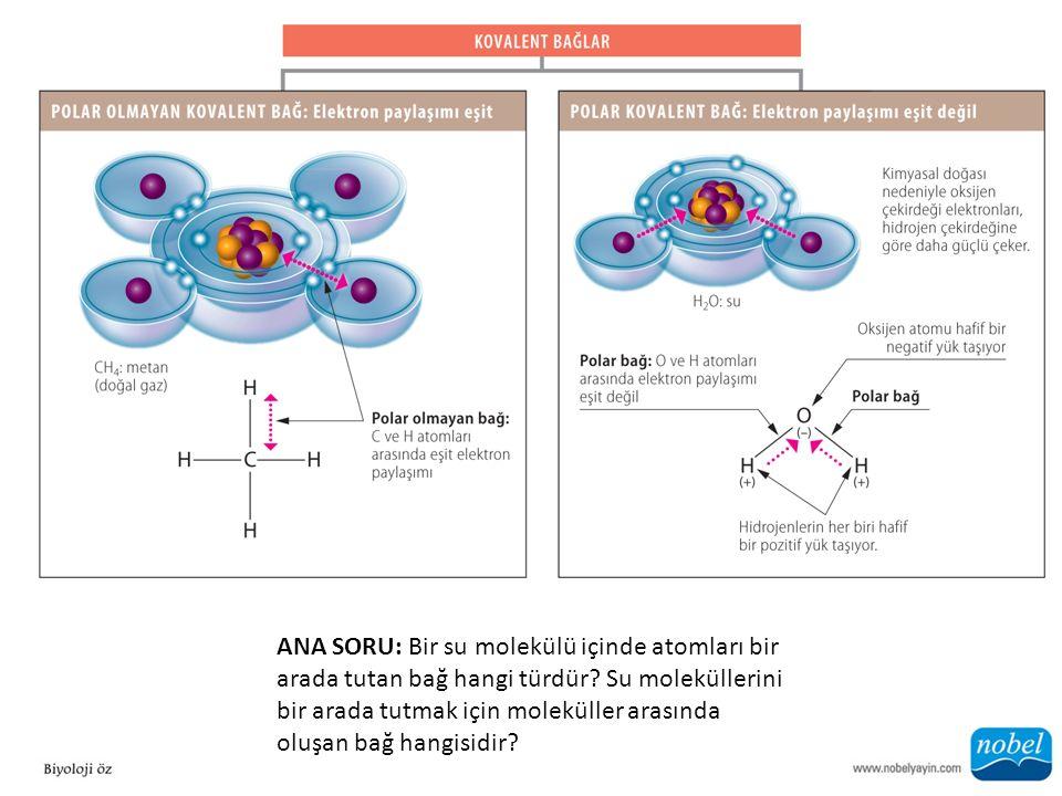 ANA SORU: Bir su molekülü içinde atomları bir arada tutan bağ hangi türdür? Su moleküllerini bir arada tutmak için moleküller arasında oluşan bağ hang