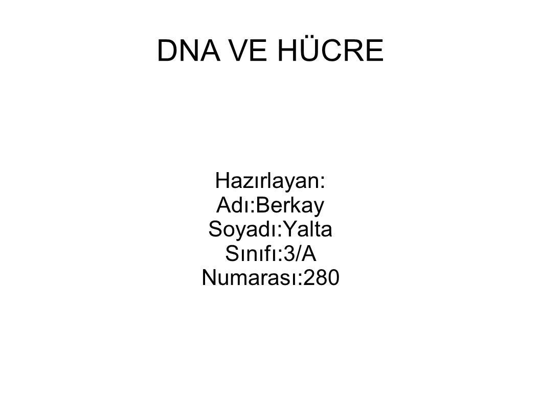 DNA VE HÜCRE Hazırlayan: Adı:Berkay Soyadı:Yalta Sınıfı:3/A Numarası:280