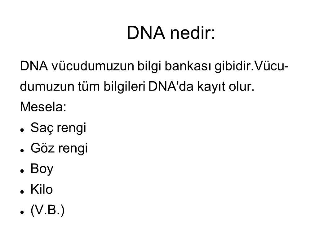 DNA nedir: DNA vücudumuzun bilgi bankası gibidir.Vücu- dumuzun tüm bilgileri DNA'da kayıt olur. Mesela: Saç rengi Göz rengi Boy Kilo (V.B.)