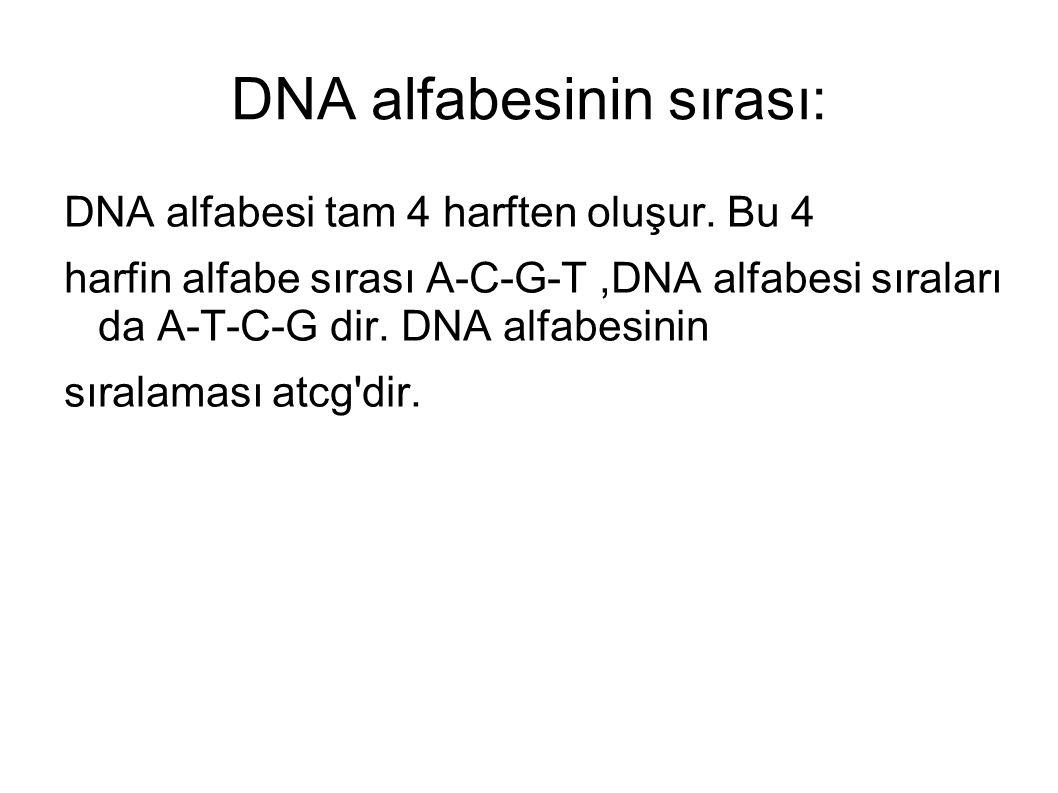 DNA alfabesinin sırası: DNA alfabesi tam 4 harften oluşur. Bu 4 harfin alfabe sırası A-C-G-T,DNA alfabesi sıraları da A-T-C-G dir. DNA alfabesinin sır