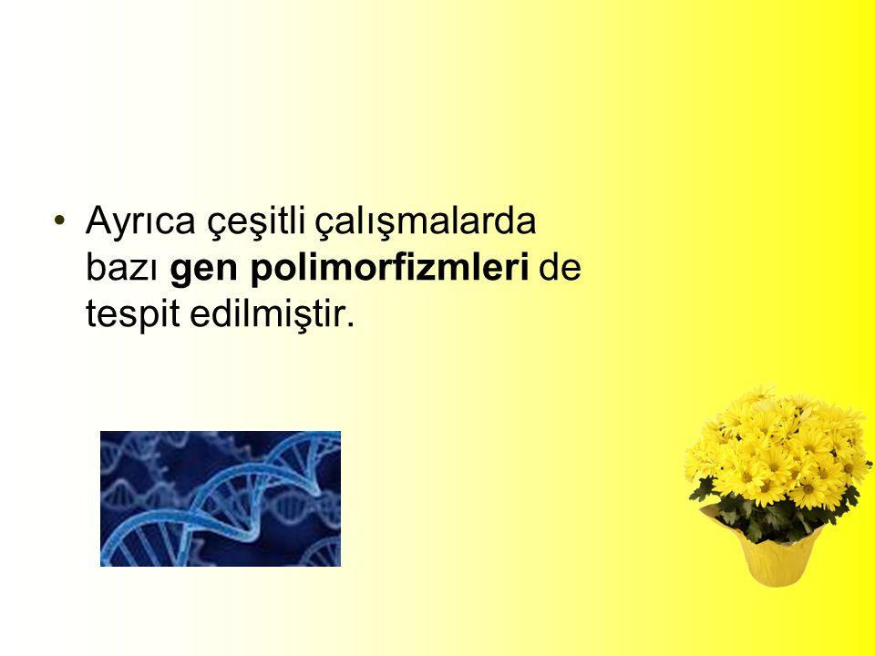 Ayrıca çeşitli çalışmalarda bazı gen polimorfizmleri de tespit edilmiştir.