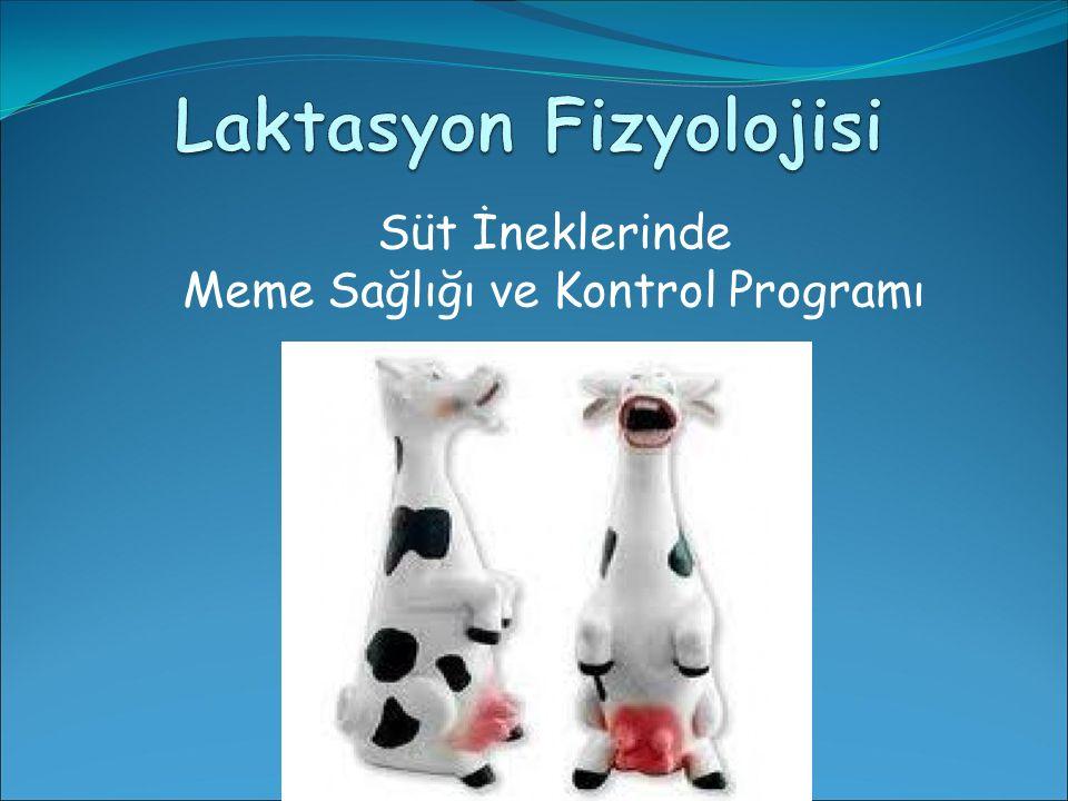 Süt İneklerinde Meme Sağlığı ve Kontrol Programı