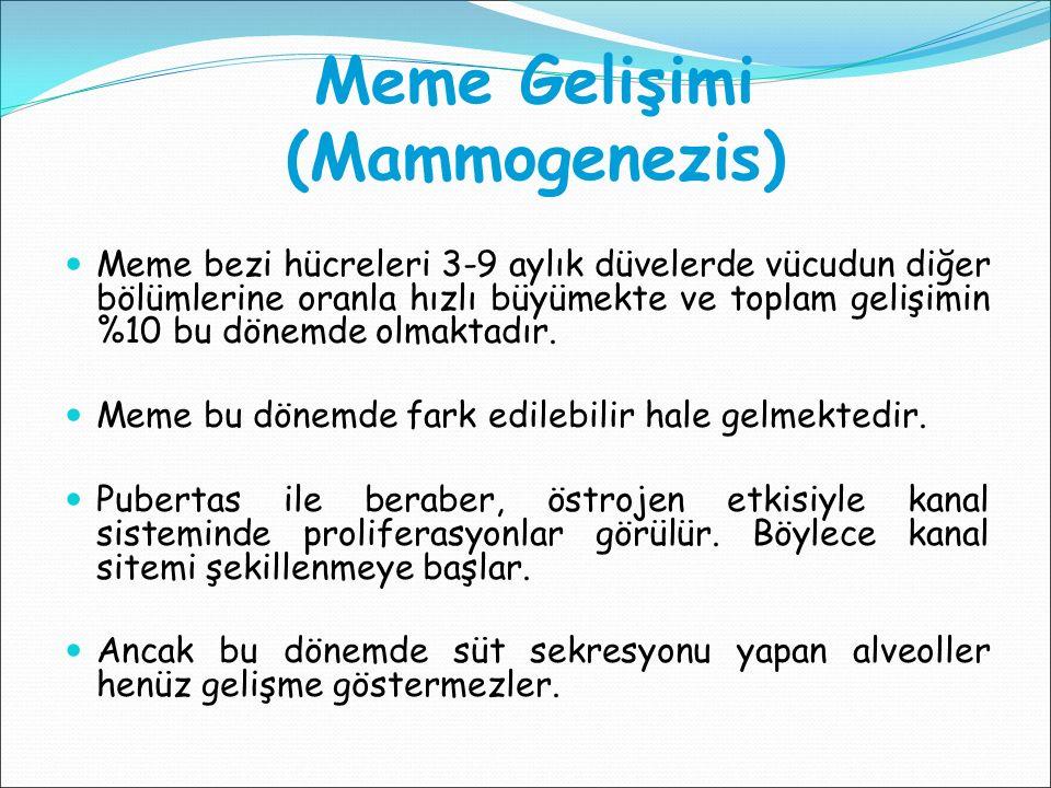 Meme Gelişimi (Mammogenezis) Meme bezi hücreleri 3-9 aylık düvelerde vücudun diğer bölümlerine oranla hızlı büyümekte ve toplam gelişimin %10 bu dönem
