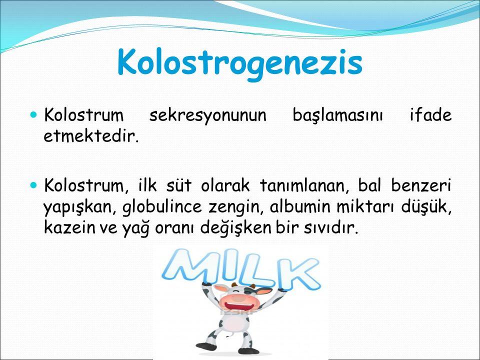 Kolostrogenezis Kolostrum sekresyonunun başlamasını ifade etmektedir. Kolostrum, ilk süt olarak tanımlanan, bal benzeri yapışkan, globulince zengin, a