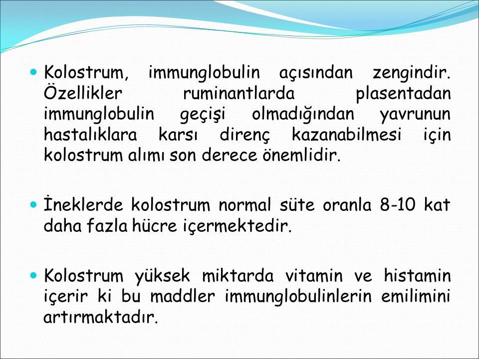 Kolostrum, immunglobulin açısından zengindir. Özellikler ruminantlarda plasentadan immunglobulin geçişi olmadığından yavrunun hastalıklara karsı diren