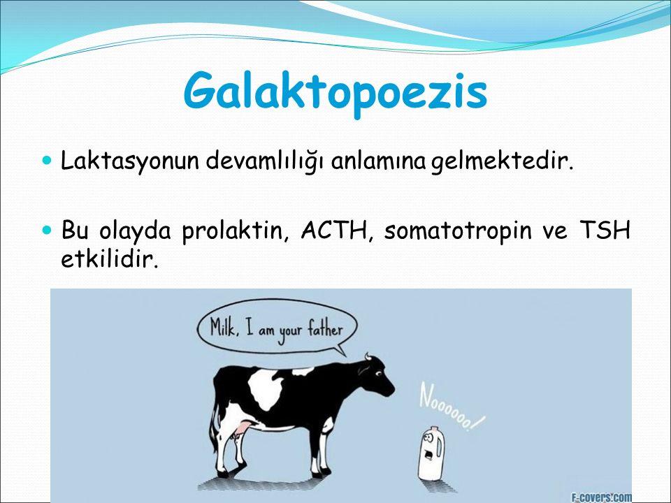 Galaktopoezis Laktasyonun devamlılığı anlamına gelmektedir. Bu olayda prolaktin, ACTH, somatotropin ve TSH etkilidir.