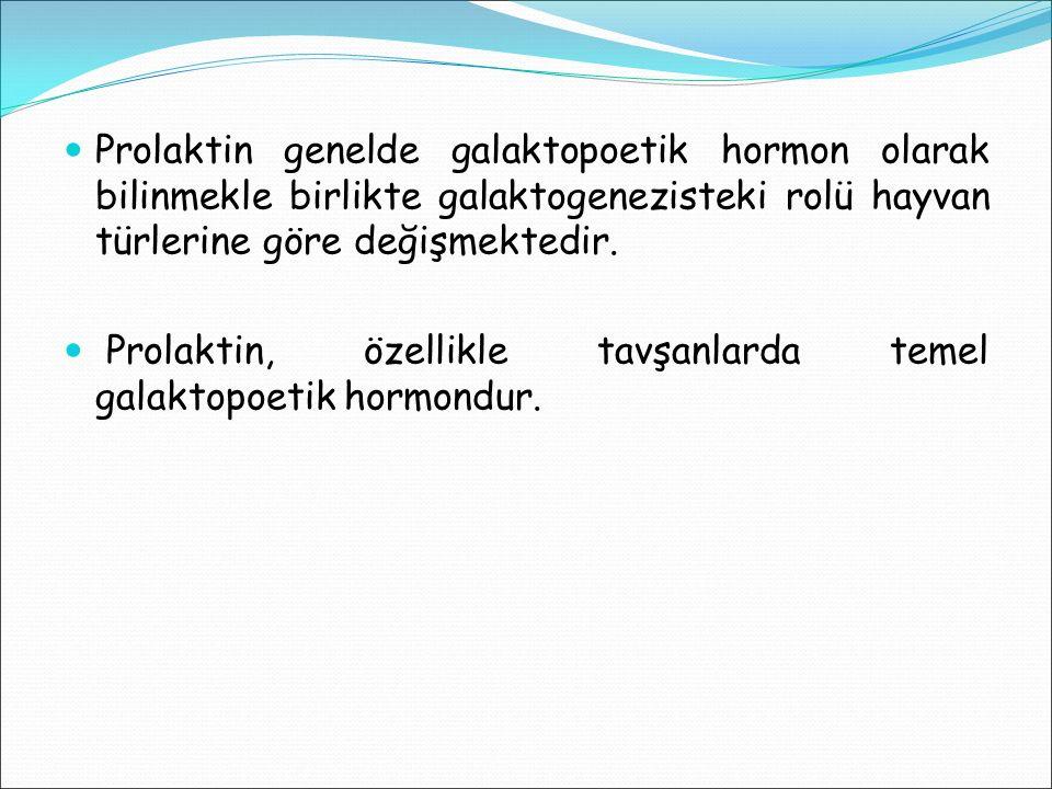 Prolaktin genelde galaktopoetik hormon olarak bilinmekle birlikte galaktogenezisteki rolü hayvan türlerine göre değişmektedir. Prolaktin, özellikle ta
