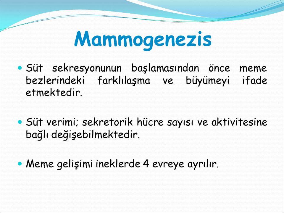 Mammogenezis Süt sekresyonunun başlamasından önce meme bezlerindeki farklılaşma ve büyümeyi ifade etmektedir. Süt verimi; sekretorik hücre sayısı ve a