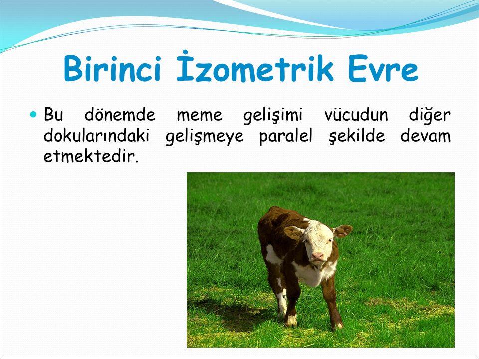 Laktasyonun Başlatılması Gebe kalma şansı olmayan düve ve ineklerden süt alınmasını sağlamak amacıyla başvurulacak bir yöntemdir.