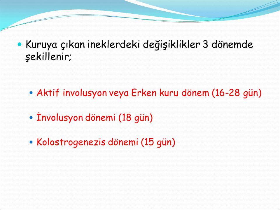 Kuruya çıkan ineklerdeki değişiklikler 3 dönemde şekillenir; Aktif involusyon veya Erken kuru dönem (16-28 gün) İnvolusyon dönemi (18 gün) Kolostrogen