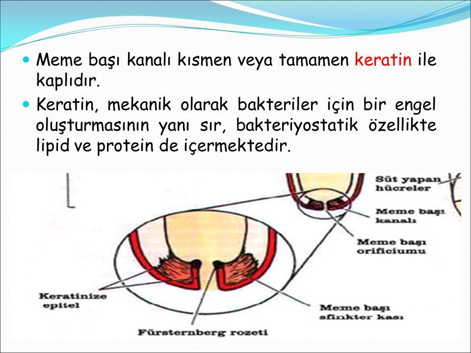 Meme başı kanalı kısmen veya tamamen keratin ile kaplıdır. Keratin, mekanik olarak bakteriler için bir engel oluşturmasının yanı sır, bakteriyostatik