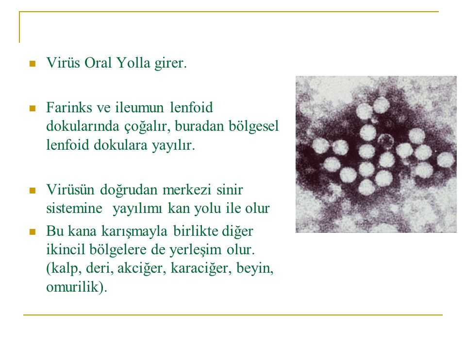 Virüs Oral Yolla girer. Farinks ve ileumun lenfoid dokularında çoğalır, buradan bölgesel lenfoid dokulara yayılır. Virüsün doğrudan merkezi sinir sist