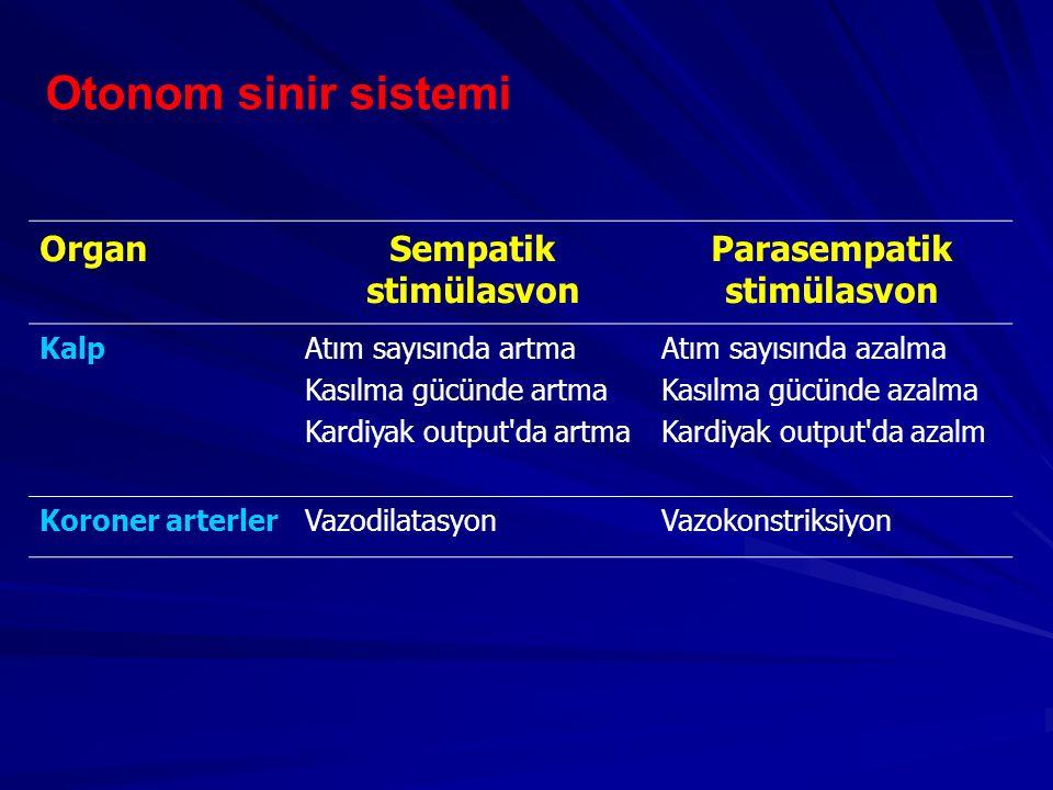 Otonom sinir sistemi OrganSempatik stimülasvon Parasempatik stimülasvon KalpAtım sayısında artma Kasılma gücünde artma Kardiyak output'da artma Atım s