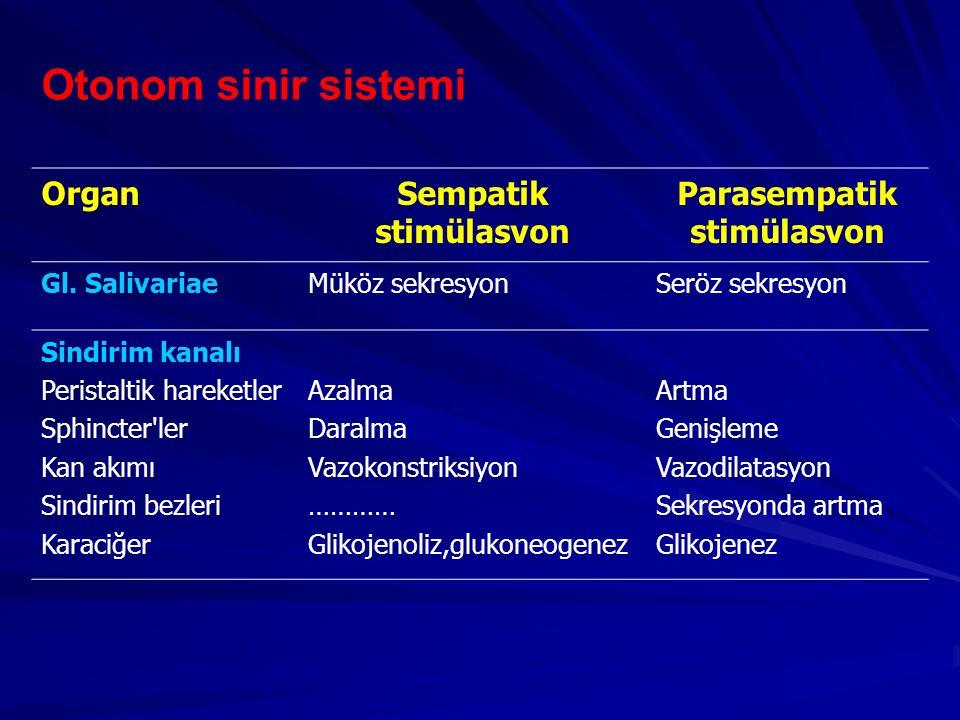 Otonom sinir sistemi OrganSempatik stimülasvon Parasempatik stimülasvon Gl. SalivariaeMüköz sekresyonSeröz sekresyon Sindirim kanalı Peristaltik harek