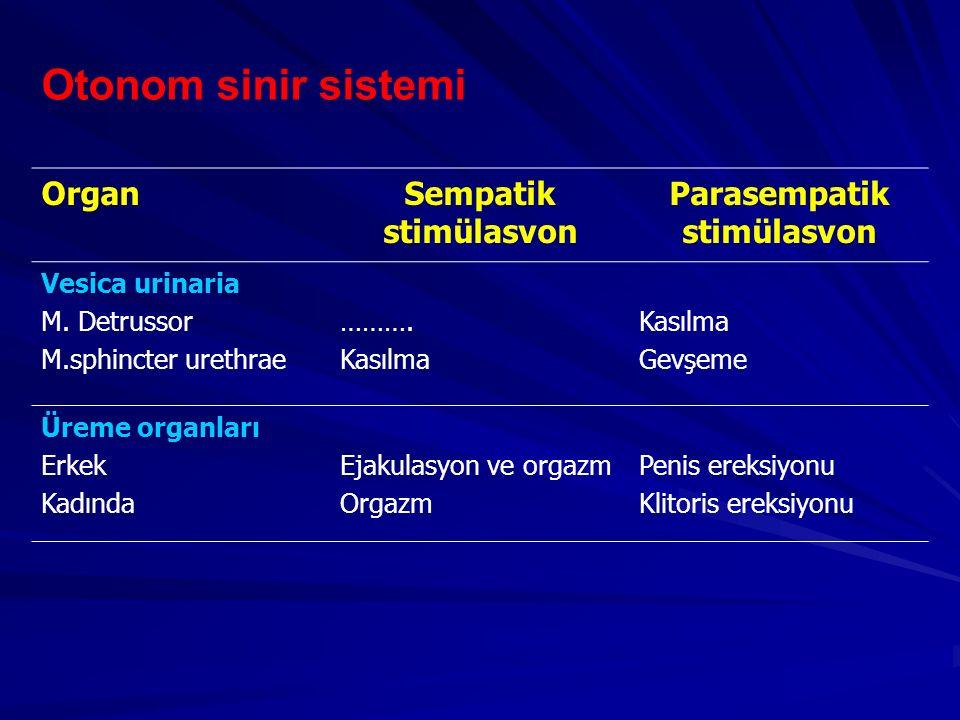 Otonom sinir sistemi OrganSempatik stimülasvon Parasempatik stimülasvon Vesica urinaria M. Detrussor M.sphincter urethrae ………. Kasılma Gevşeme Üreme o