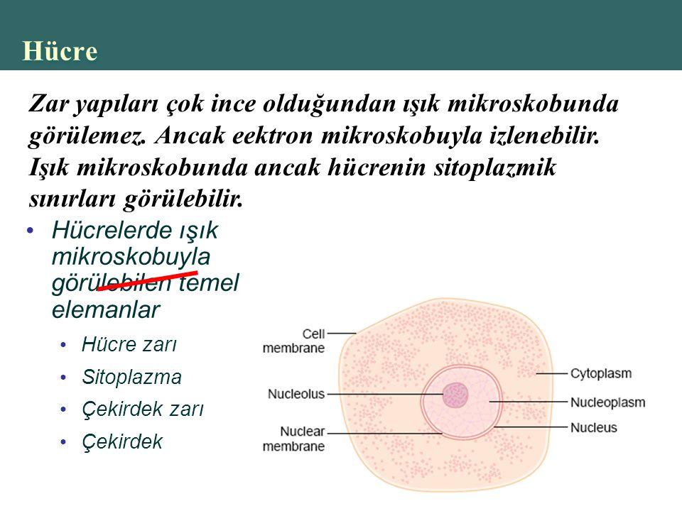 Copyright © 2004 Pearson Education, Inc., publishing as Benjamin Cummings Hücre Hücrelerde ışık mikroskobuyla görülebilen temel elemanlar Hücre zarı Sitoplazma Çekirdek zarı Çekirdek Zar yapıları çok ince olduğundan ışık mikroskobunda görülemez.
