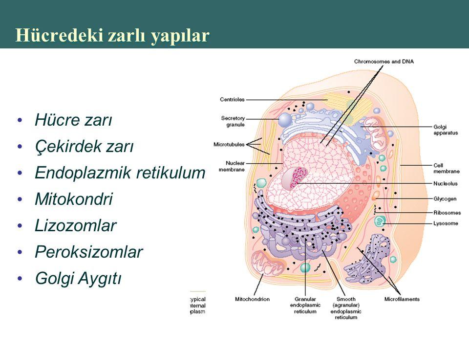 Copyright © 2004 Pearson Education, Inc., publishing as Benjamin Cummings Hücredeki zarlı yapılar Hücre zarı Çekirdek zarı Endoplazmik retikulum Mitokondri Lizozomlar Peroksizomlar Golgi Aygıtı