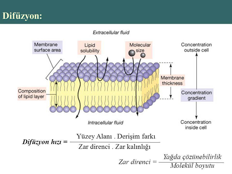 Copyright © 2004 Pearson Education, Inc., publishing as Benjamin Cummings Difüzyon: Difüzyon hızı = Yüzey Alanı.