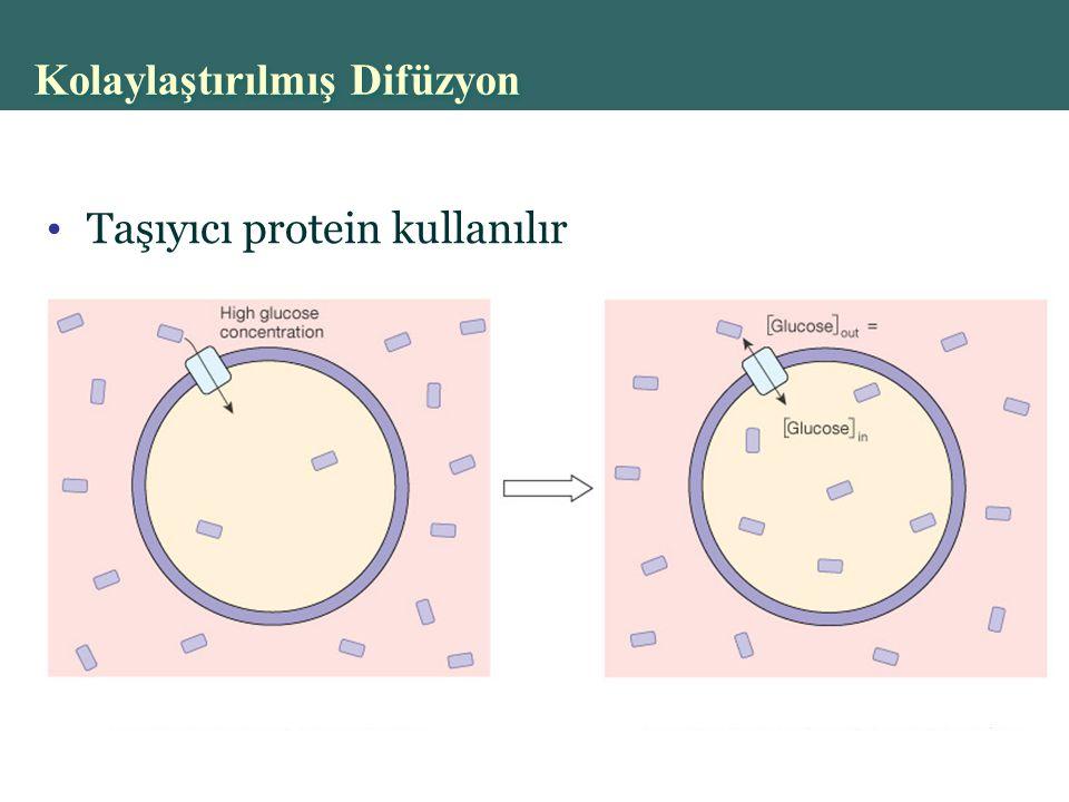 Copyright © 2004 Pearson Education, Inc., publishing as Benjamin Cummings Taşıyıcı protein kullanılır Kolaylaştırılmış Difüzyon