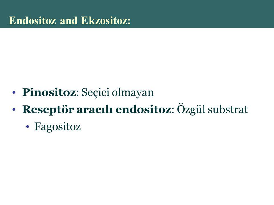 Copyright © 2004 Pearson Education, Inc., publishing as Benjamin Cummings Pinositoz: Seçici olmayan Reseptör aracılı endositoz: Özgül substrat Fagositoz Endositoz and Ekzositoz: