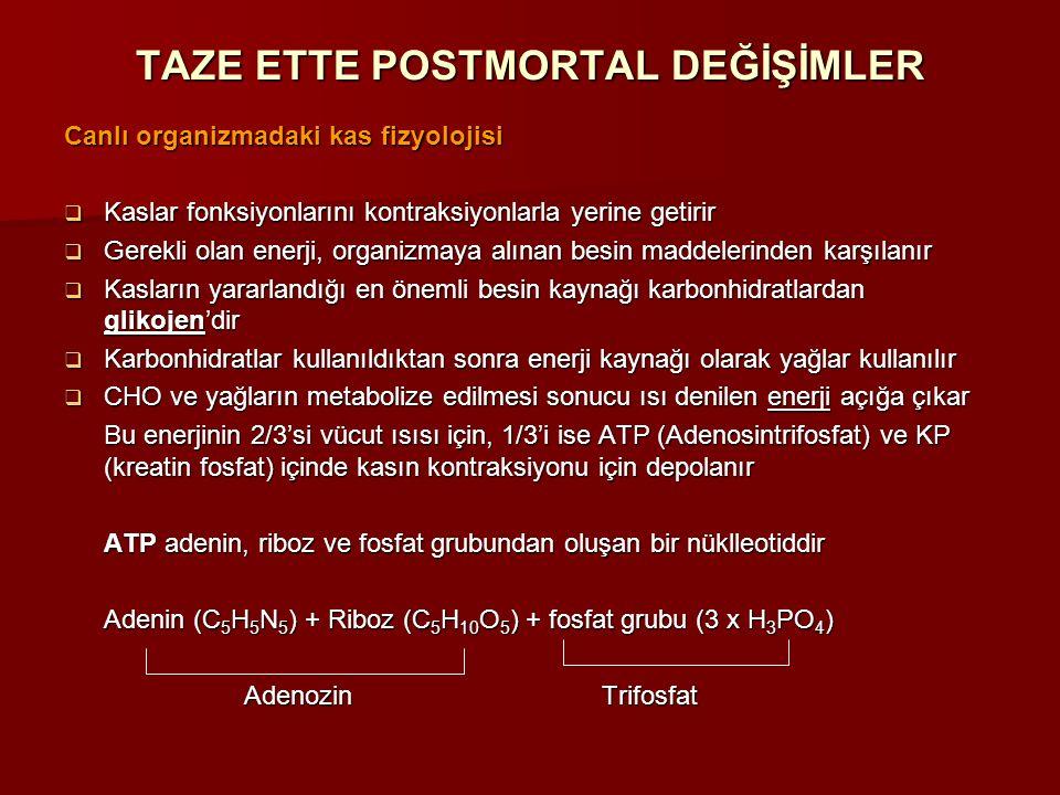 TAZE ETTE POSTMORTAL DEĞİŞİMLER Canlı organizmadaki kas fizyolojisi  Kaslar fonksiyonlarını kontraksiyonlarla yerine getirir  Gerekli olan enerji, o