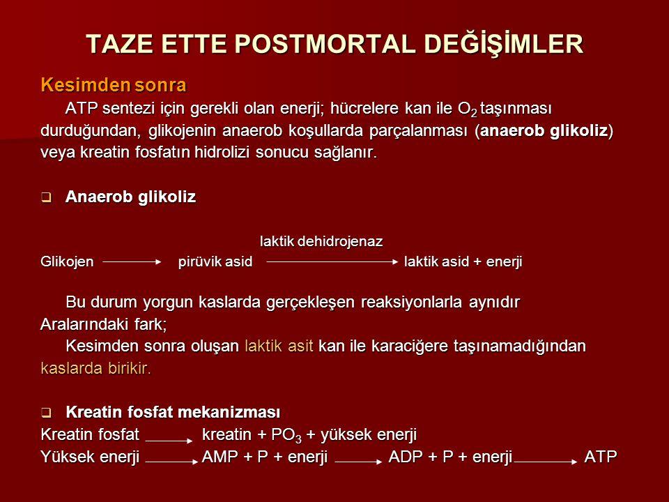 Kesimden sonra ATP sentezi için gerekli olan enerji; hücrelere kan ile O 2 taşınması durduğundan, glikojenin anaerob koşullarda parçalanması (anaerob