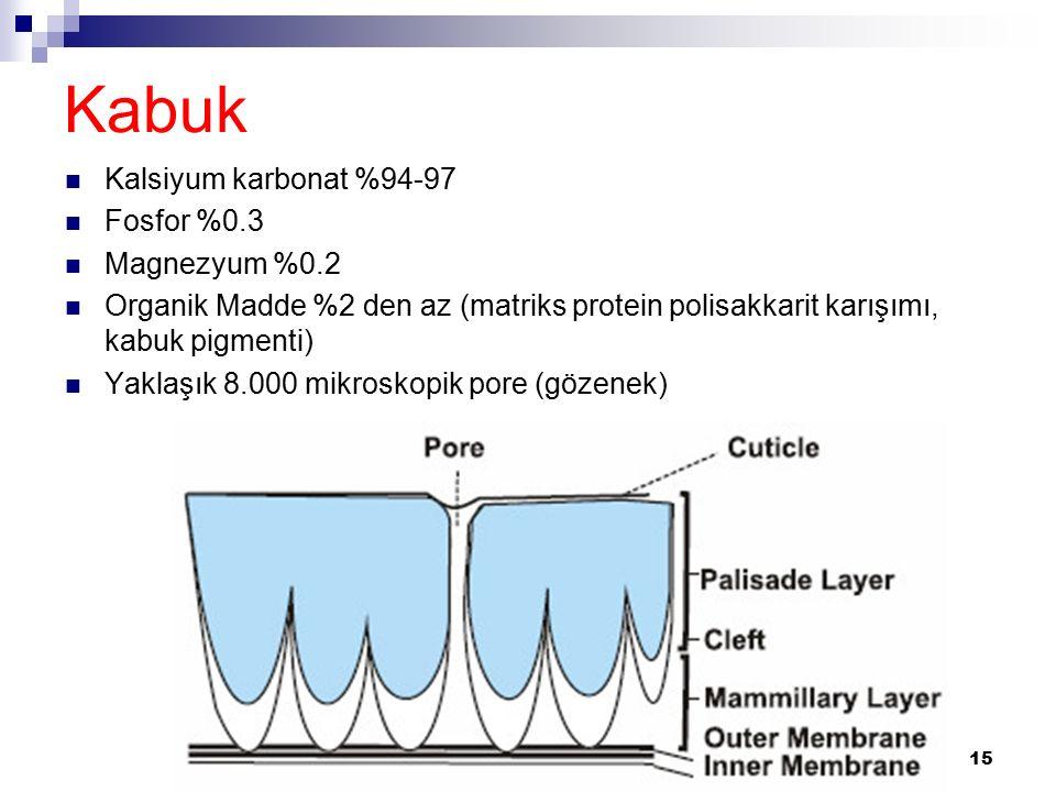 Kabuk Kalsiyum karbonat %94-97 Fosfor %0.3 Magnezyum %0.2 Organik Madde %2 den az (matriks protein polisakkarit karışımı, kabuk pigmenti) Yaklaşık 8.000 mikroskopik pore (gözenek) 15