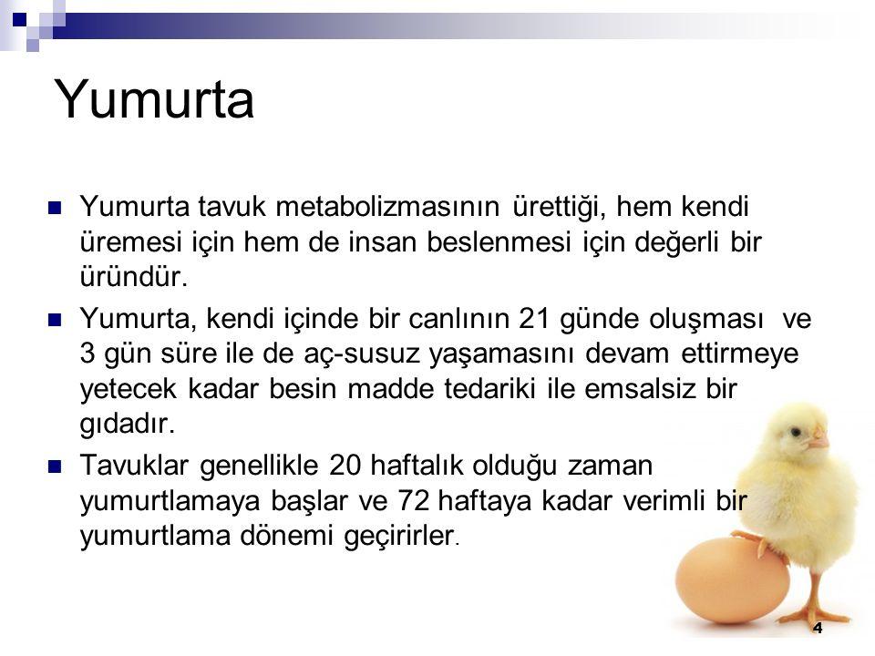 Yumurta Yumurta tavuk metabolizmasının ürettiği, hem kendi üremesi için hem de insan beslenmesi için değerli bir üründür.