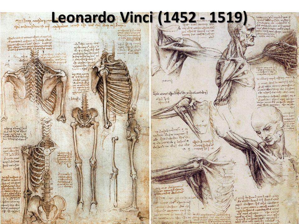 Büyük İtalyan Rönesans sanatçısı ve bilimadamı, Leonardo Da Vinci (1452-1519) 100 den fazla vücudu diseksiyonla incelemiş ve böylece organların anatomik çizimlerini büyük bir anatomi atlası için tasarlamıştı.