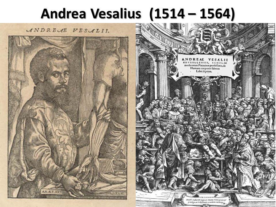 Andrea Vesalius (1514 – 1564)