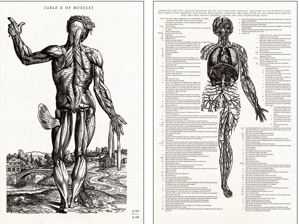 1846'da tekrar basılan kitabındaki bu çizimiyle Vesalius vücudu saran venöz damar ağını göstermektedir.