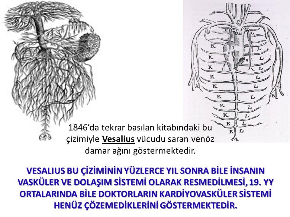 1846'da tekrar basılan kitabındaki bu çizimiyle Vesalius vücudu saran venöz damar ağını göstermektedir. VESALIUS BU ÇİZİMİNİN YÜZLERCE YIL SONRA BİLE