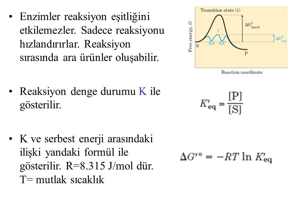 Enzimler reaksiyon eşitliğini etkilemezler. Sadece reaksiyonu hızlandırırlar. Reaksiyon sırasında ara ürünler oluşabilir. Reaksiyon denge durumu K ile