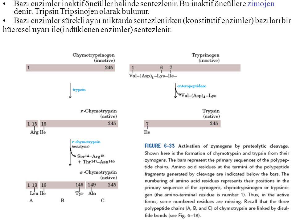 Bazı enzimler inaktif öncüller halinde sentezlenir. Bu inaktif öncüllere zimojen denir. Tripsin Tripsinojen olarak bulunur. Bazı enzimler sürekli aynı