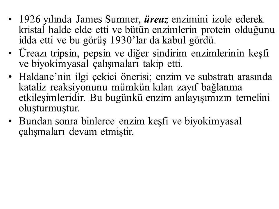 1926 yılında James Sumner, üreaz enzimini izole ederek kristal halde elde etti ve bütün enzimlerin protein olduğunu idda etti ve bu görüş 1930'lar da