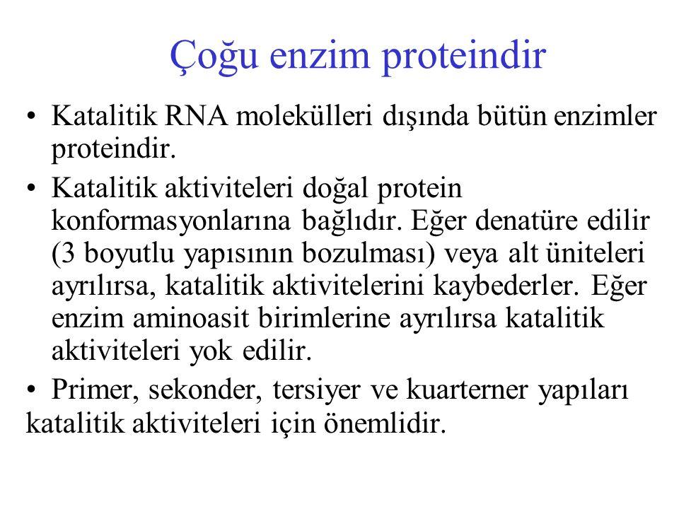 Çoğu enzim proteindir Katalitik RNA molekülleri dışında bütün enzimler proteindir. Katalitik aktiviteleri doğal protein konformasyonlarına bağlıdır. E