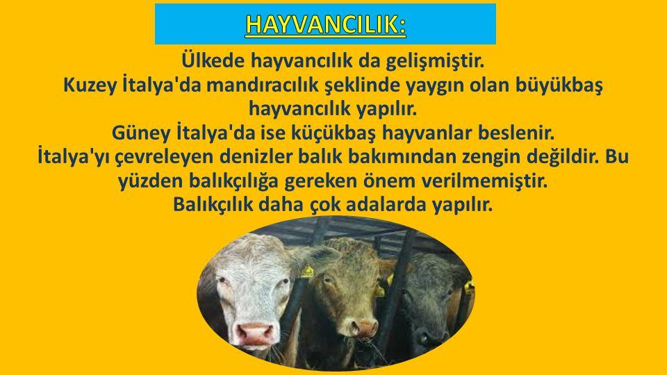 Ülkede hayvancılık da gelişmiştir.
