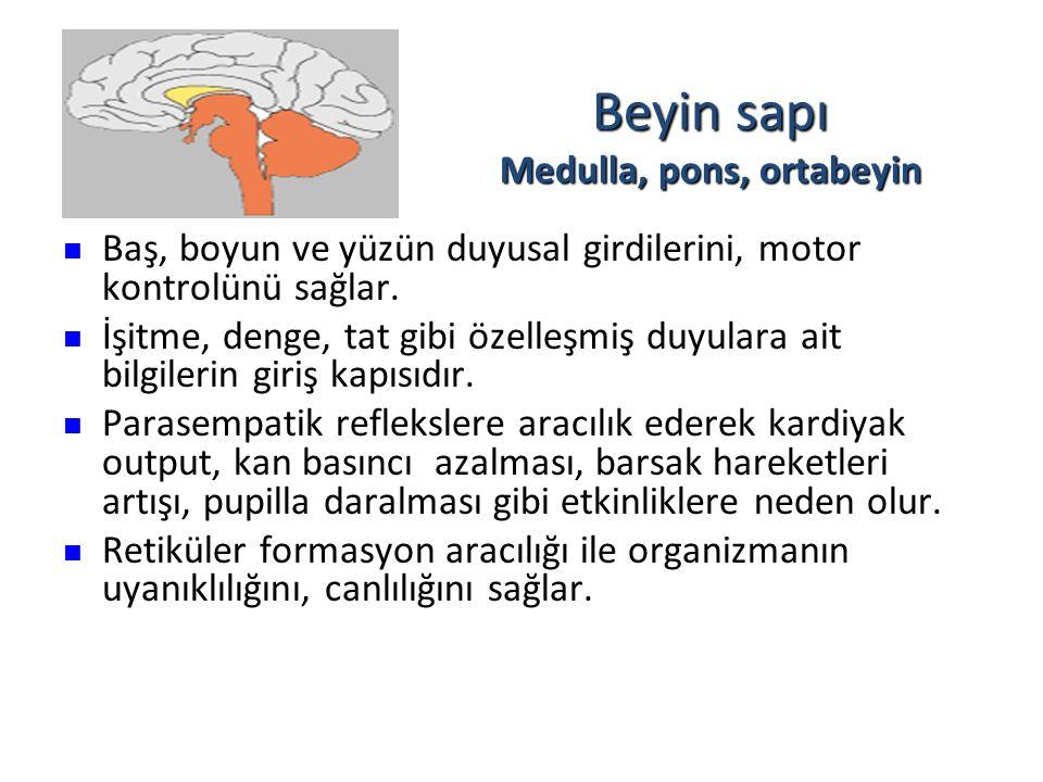 Beyin sapı Medulla, pons, ortabeyin Baş, boyun ve yüzün duyusal girdilerini, motor kontrolünü sağlar. Baş, boyun ve yüzün duyusal girdilerini, motor k