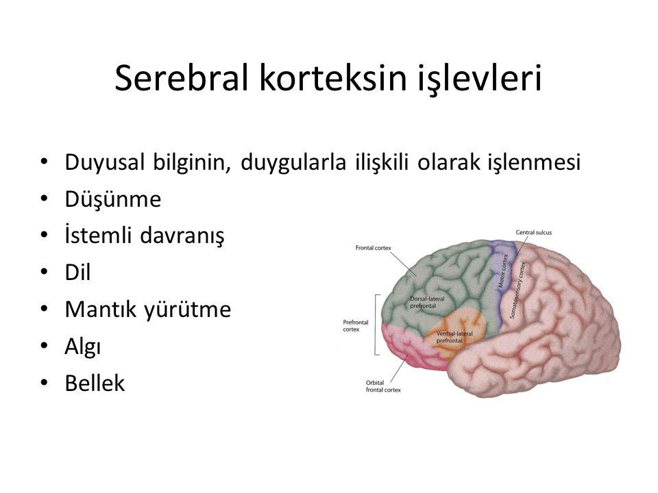 Serebral korteksin işlevleri Duyusal bilginin, duygularla ilişkili olarak işlenmesi Düşünme İstemli davranış Dil Mantık yürütme Algı Bellek