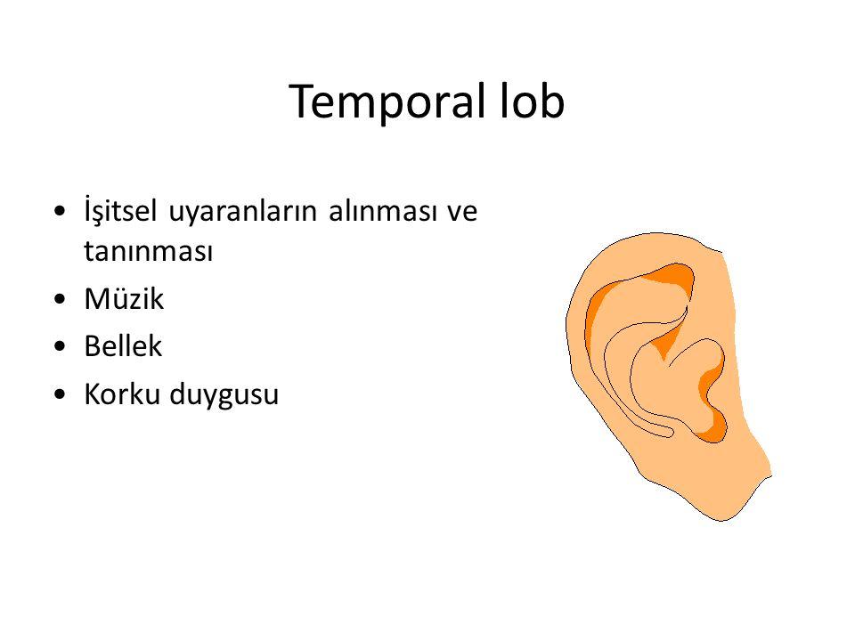 Temporal lob İşitsel uyaranların alınması ve tanınması Müzik Bellek Korku duygusu