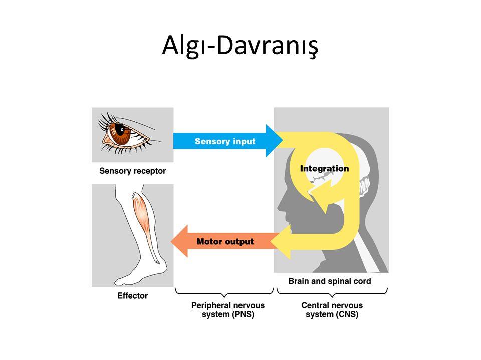 Duyum Çevremizdeki ışık, ses, basınç gibi enerji değişikliklerinin yani uyaranların duyu organlarındaki reseptörler tarafından sinir akımı haline dönüştürülerek beynimize ulaştırılmasına duyum denir