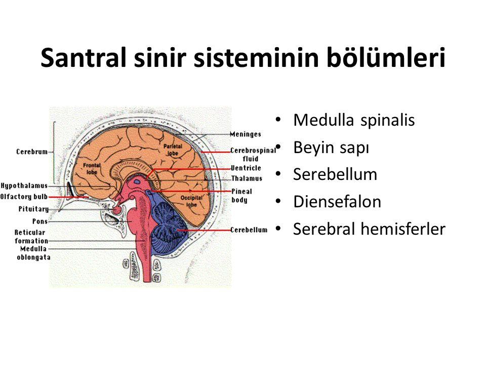 Santral sinir sisteminin bölümleri Medulla spinalis Beyin sapı Serebellum Diensefalon Serebral hemisferler