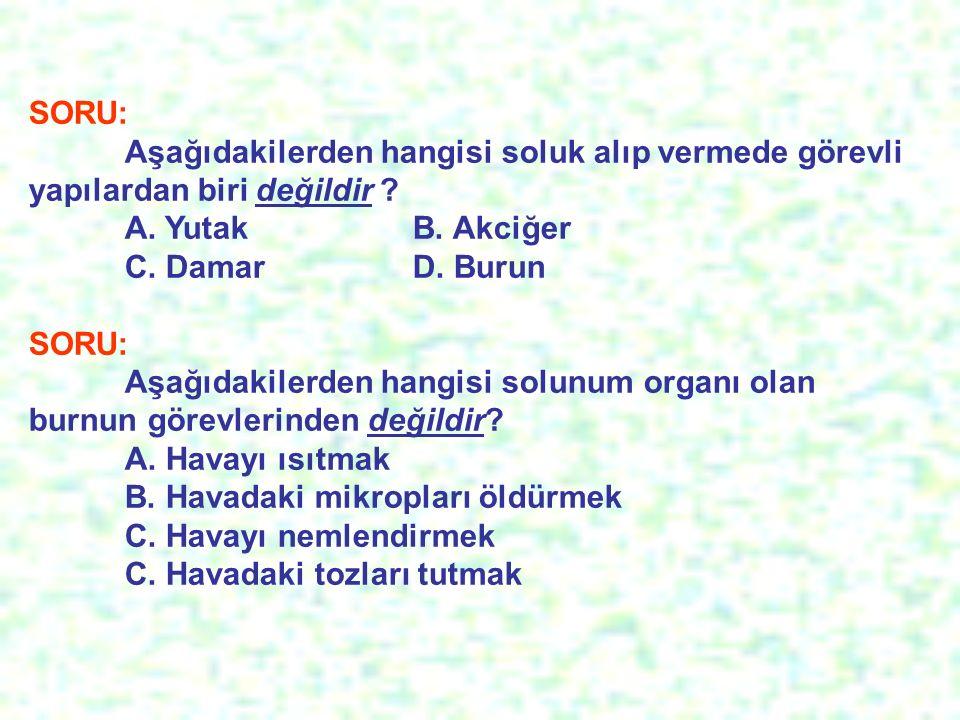 SORU: Aşağıdakilerden hangisi soluk alıp vermede görevli yapılardan biri değildir .
