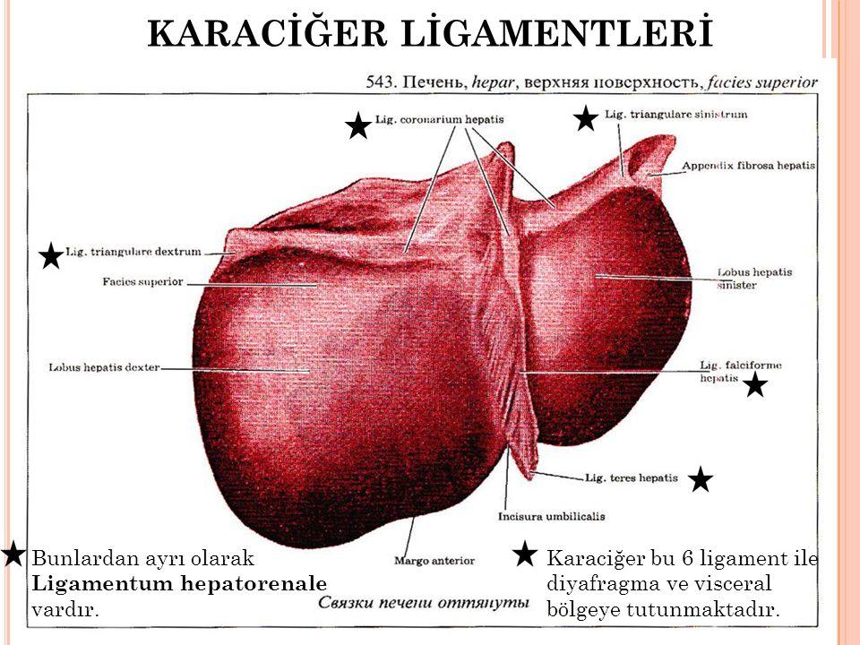 KARACİĞER LİGAMENTLERİ Bunlardan ayrı olarak Ligamentum hepatorenale vardır. Karaciğer bu 6 ligament ile diyafragma ve visceral bölgeye tutunmaktadır.